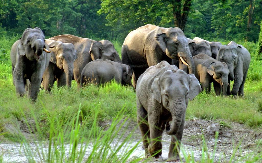 Jaldapara- Bengal Tourism Guide 2020