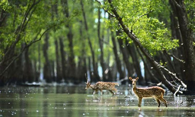 Sundarban Guide- West Bengal Tourism 2020