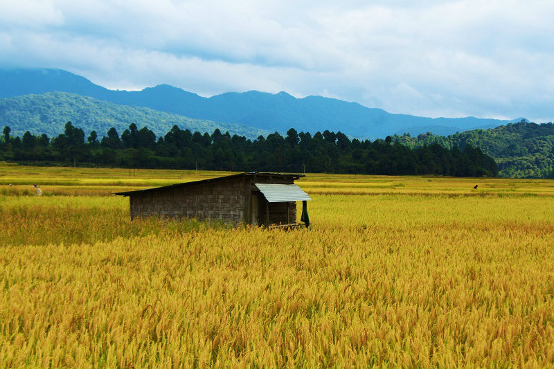Ziro Valley Travel Guide